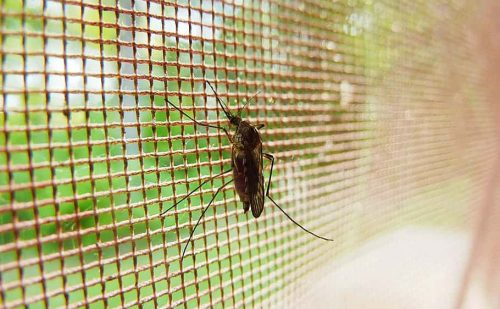 World Malaria Day 2021- Ending Malaria is Within Reach in Ghana